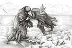 Corvus Ursus